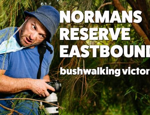 Normans Reserve, Warrandyte – Bushwalking Victoria